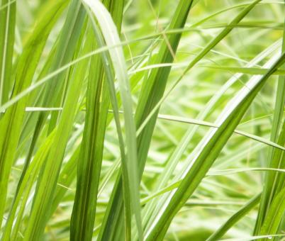 Free Stock Photo of Long Grass Background