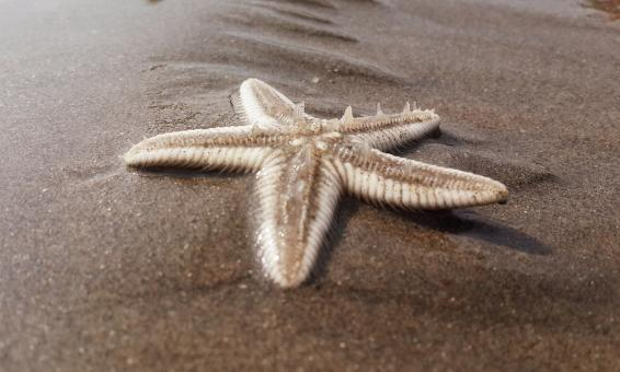 Free Stock Photo of Starfish on the Beach