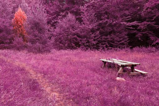Free Stock Photo of Off the Beaten Picnic Trail - Purple Pandemonium