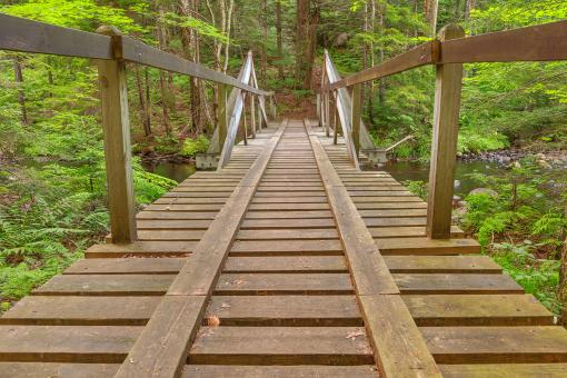 Free Stock Photo of Forest Track Bridge - HDR