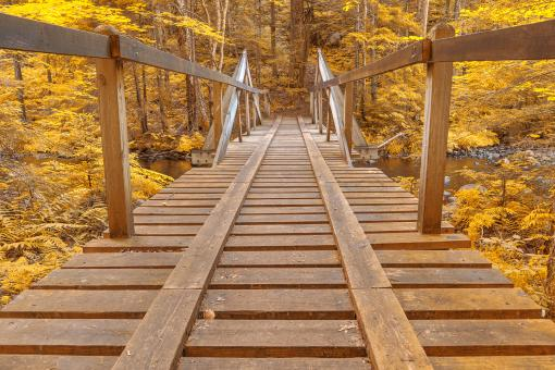 Free Stock Photo of Golden Forest Track Bridge - HDR