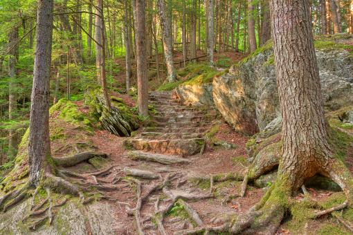 Free Stock Photo of Green Mountain Forest Trail - HDR