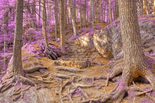 Free Stock Photo of Purple Mountain Forest Trail - HDR