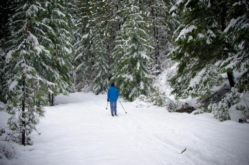 Free Stock Photo of Skiing through the Wild