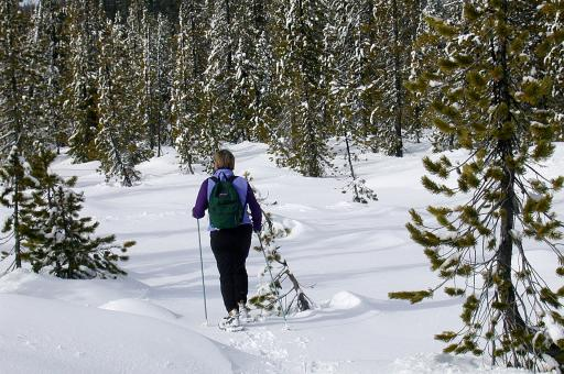 Free Stock Photo of Snow Shoeing
