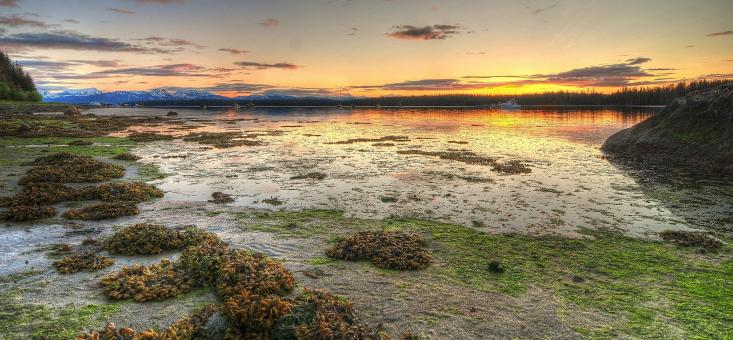 Free Stock Photo of Low Tide