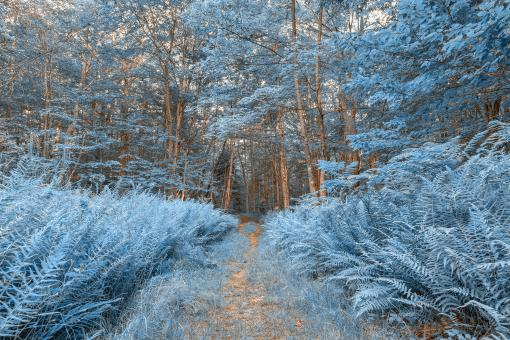 Free Stock Photo of Winter Fern Trail - HDR