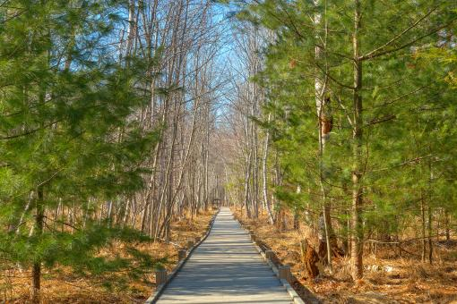 Free Stock Photo of Jesup Boardwalk Trail - HDR