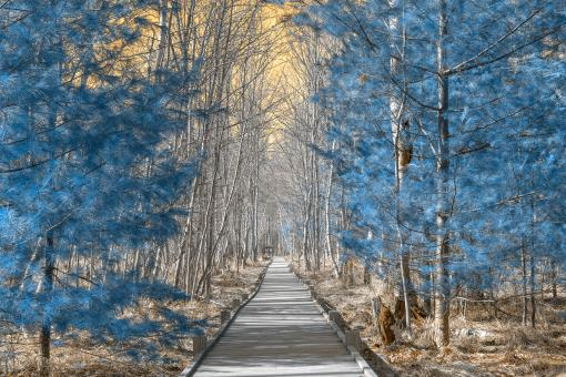 Free Stock Photo of Jesup Boardwalk Trail - Solar Winter HDR