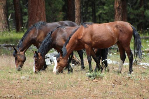 Free Stock Photo of Feral Horses