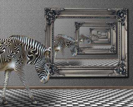 Free Stock Photo of Zebra Reflection