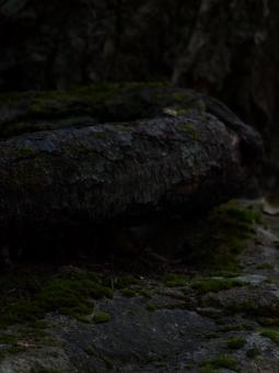 Free Stock Photo of Tree and rock