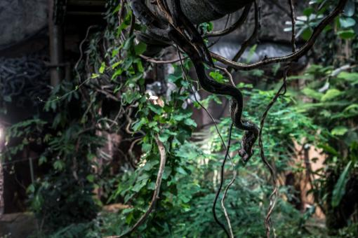 Free Stock Photo of Jungle illusion