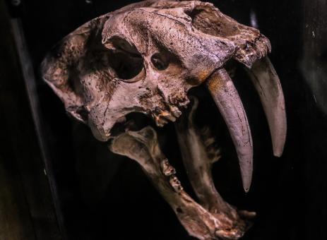 Free Stock Photo of Extinct Animal Skull