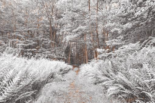 Free Stock Photo of Snow Fern Trail