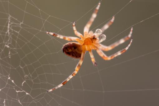 Free Stock Photo of Garden Spider