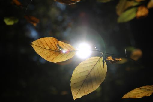 Free Stock Photo of Sunlight through the Leaves