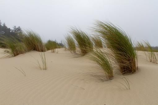 Free Stock Photo of Sand Dunes