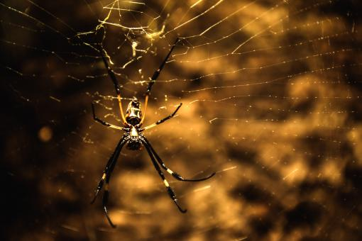 Free Stock Photo of Wild Spider