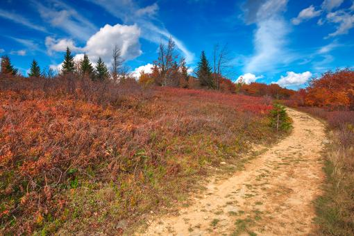 Free Stock Photo of Winding Autumn Dolly Sods Trail - HDR
