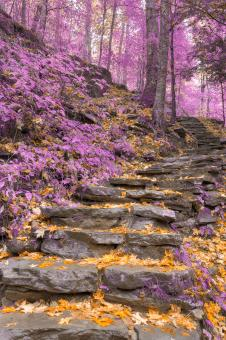 Free Stock Photo of Gold Lavender Staircase - HDR
