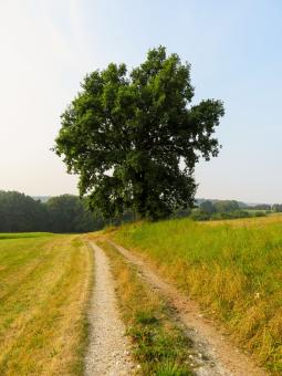 Free Stock Photo of Near the Farm