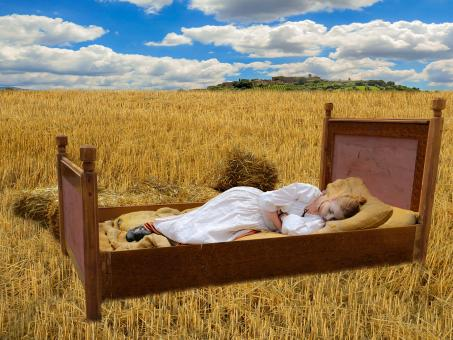 Free Stock Photo of Sleeping in the Corn Field