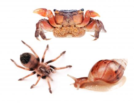 Free Stock Photo of Spider, snail and crab