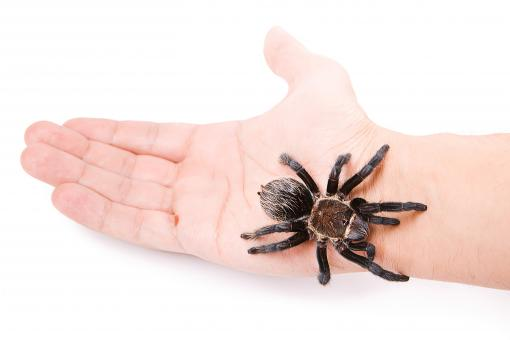 Free Stock Photo of Tarantula on the Hand