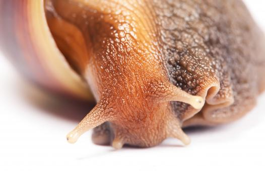 Free Stock Photo of snail