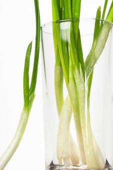 Free Stock Photo of Green onion