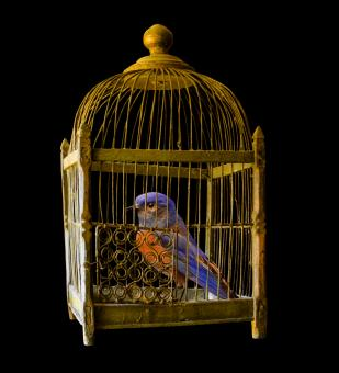 Free Stock Photo of Bird in the Cage