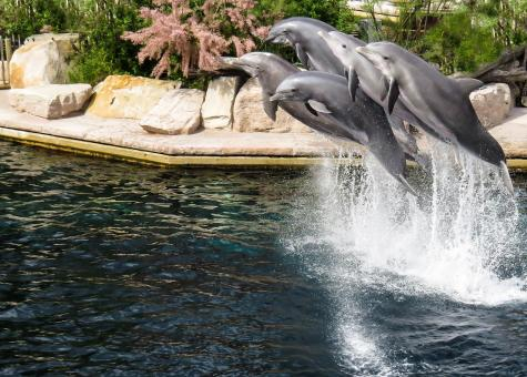 Free Stock Photo of Dolphins in the Park