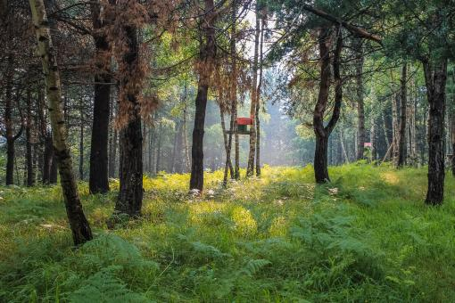 Free Stock Photo of Red birdhouse in foggy, summer forest
