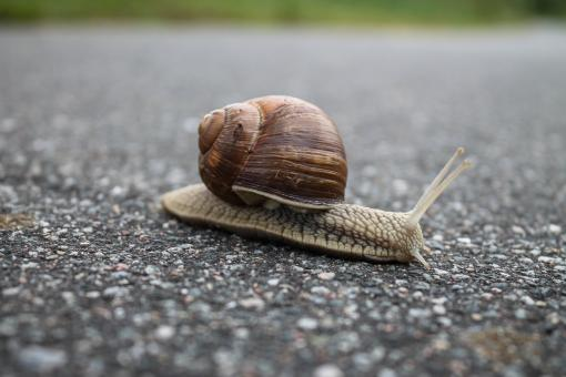 Free Stock Photo of Closeup of snail on the street