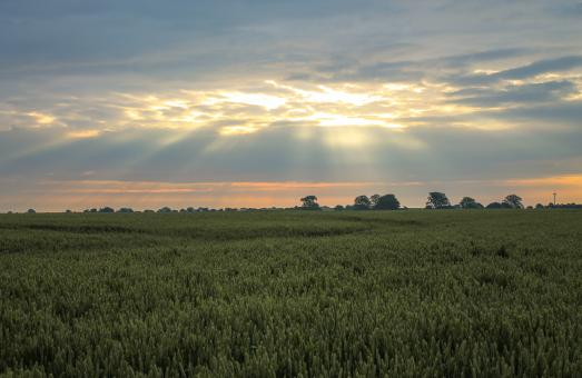 Free Stock Photo of Sun shining through the clouds over a green wheat field