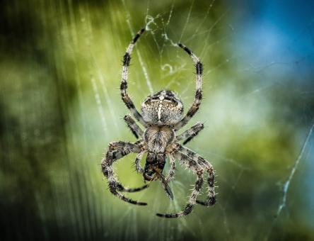 Free Stock Photo of Spider Closeup