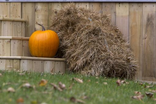 Free Stock Photo of Pumpkin and Hay