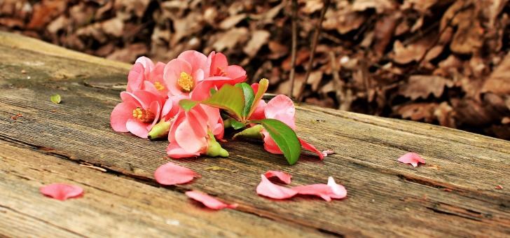 Free Stock Photo of Flowers on the Wood