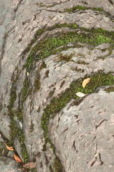 Free Stock Photo of Mossy Stone Curves