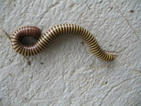 Free Stock Photo of Worm