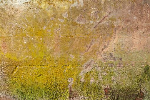 Free Stock Photo of Organic Wall Decay - HDR Texture