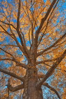 Free Stock Photo of Glowing Autumn Tree Foliage - HDR