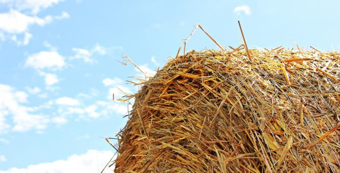 Free Stock Photo of Straw Role