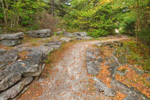 Free Stock Photo of Spruce Knob Autumn Rock Trail - HDR