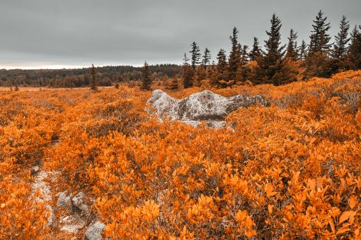 Free Stock Photo of Amber Dolly Sods - HDR