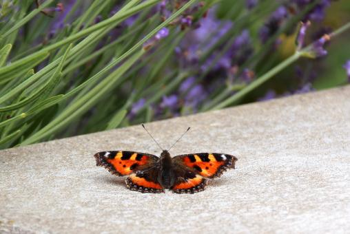 Free Stock Photo of Butterfly in the Garden
