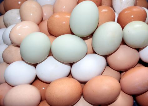 Free Stock Photo of Macro Eggs