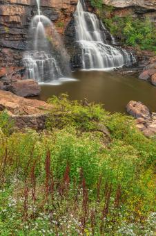 Free Stock Photo of Blackwater Wildflower Falls - HDR
