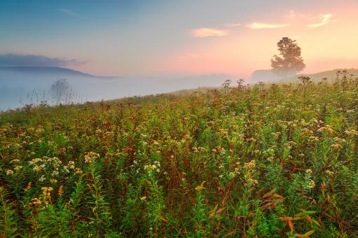 Free Stock Photo of Misty Canaan Valley Sunrise - HDR